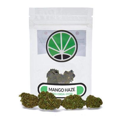 mango-legal-cannabis-cbd--cannabis-blumen