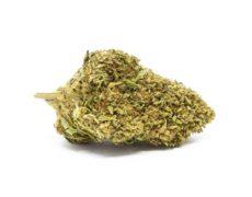 Bubblegum Cannabis CBD Bluten