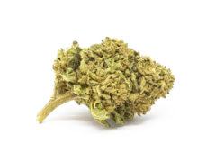 gorilla glue cbd bluten cannabis