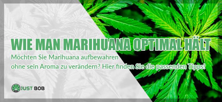 Wie man Marihuana optimal hält