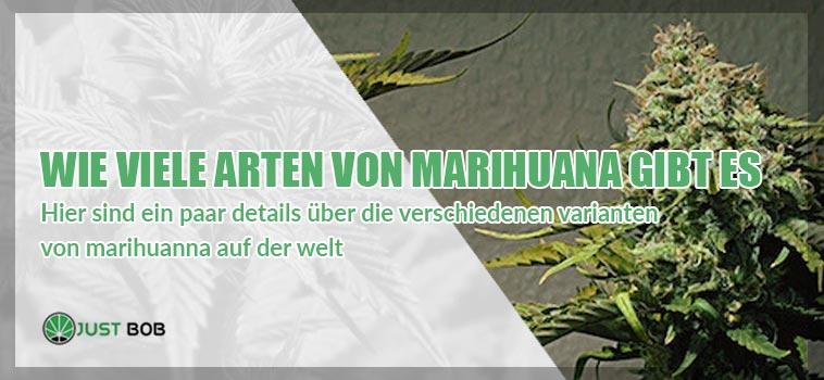 Wie viele Arten von Marihuana gibt es