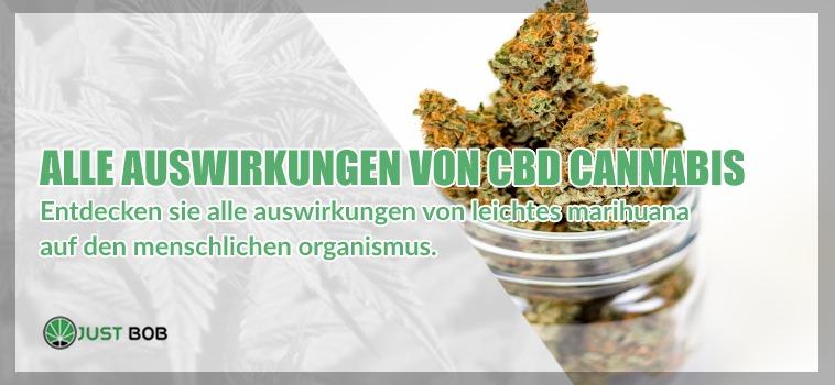 Entdecken sie alle auswirkungen von legalem CBD-cannabis (leichtes marihuana) auf den menschlichen organismus