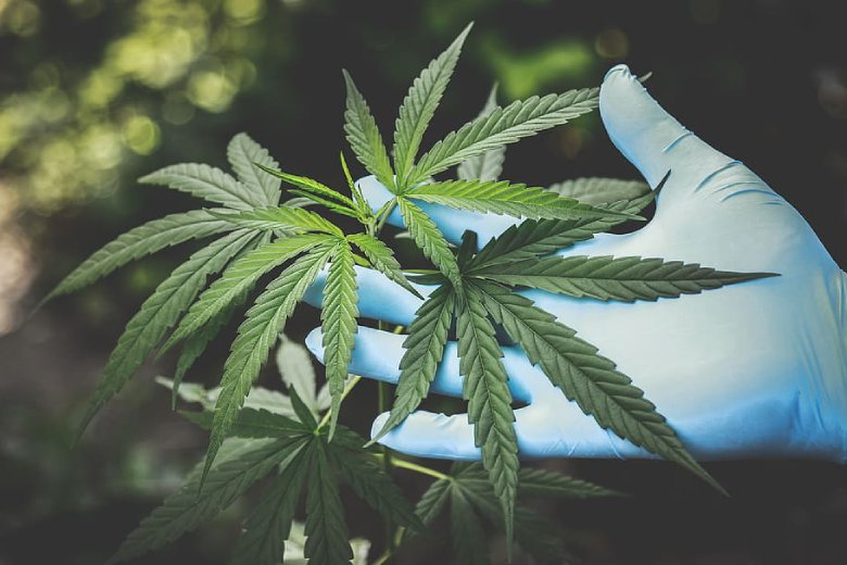 dokumentarfilme über marihuana legales
