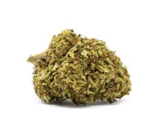 Orange Bud Bluten Cannabis